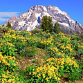 Teton Spring In The Valley by Greg Norrell
