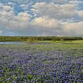 Texas Bluebonnet Bliss by Lynn Bauer