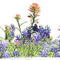 Texas Bluebonnets And Red Indian Paintbrushes by David and Carol Kelly