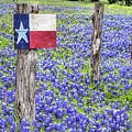 Texas Bluebonnets by JC Findley