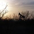Texas Landscape by Shanna Robinson