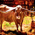 Texas Longhorn Cattle 5314.01 by M K Miller