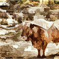 Texas Longhorn Cattle 5314.07 by M K Miller