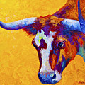 Texas Longhorn Cow Study by Marion Rose