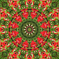 Texas Paintbrush Kaleidoscope by Robyn Stacey