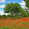Texas Poppy Field 159 by Ray Shrewsberry