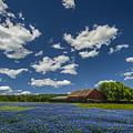 Texas Springtime by Chelsea Stockton