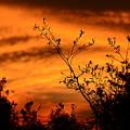 Texas Sunrise by Shannon L Smith