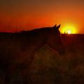Texas Sunset by Susanne Van Hulst