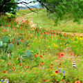 Texas Wildflowers And Cactus - Country Road by Rebecca Korpita