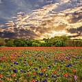 Texas Wildflowers Under Sunset Skies by Lynn Bauer