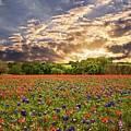 Texas Wildflowers Under Sunset Skies by Lynn Bauer