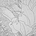 Texture And Foliage by Dixie Trent