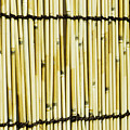 Texture Of Bamboo by Bill Brennan - Printscapes