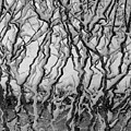 Texture Of Trees by Rosanne Licciardi
