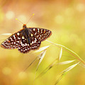 Textured Chalcedon Butterfly by Mimi Ditchie