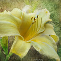 Textured Daylily by Diane Hawkins