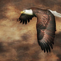 Textured Eagle 2 by Lori Deiter