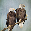 Textured Eagles by Jeff Swanson