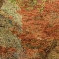 Textured Fall Trees by Martyn Arnold