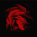 Textured Rose by Russ Mullen