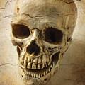 Textured Skull by Garry Gay