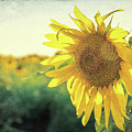 Textured Sunflower by Dan Sproul