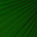 Texturized Palm Leaf by Tikvah's Hope
