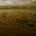 Th Low Tide by Angel  Tarantella