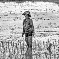 Thailand Rice Planter by James Zebrack