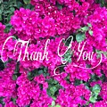 Thank You 1 by Christine McCole