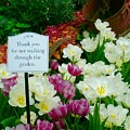 Thank You For Not Walking Thru The Garden by Jacqueline Manos