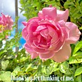 Thank You For Thinking Of Me- Rose by Christine McCole