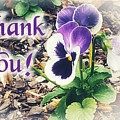 Thank You Pansy by Rachel Hannah