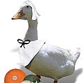 Thanksgiving Pilgrim Duck by Gravityx9  Designs