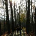 Thanksgiving Walk by John Meader