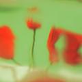 Phantoms Of Red Tulips. by Alexander Vinogradov