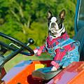 That Is One Hard Workin' Farm Dog by Grant Groberg