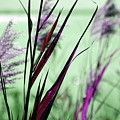That Magic Color  by Susanne Van Hulst