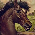 That Old Chesnut - Horse by Joy of Life Art Gallery