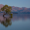 That Tree - Wanaka by Steven Hirsch