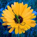Imaginary Flower by Glen Faxon