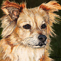 The Adventurous Dog by Portraits By NC