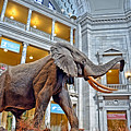 The African Bush Elephant In The Rotunda Of The National Museum Of Natural History by Jim Fitzpatrick
