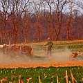 The Amish Way by Scott Mahon