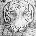 The Amur Tiger by Alexander Ivanov