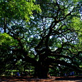 The Angel Oak In Summer by Susanne Van Hulst