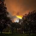 The Apple Trees by Angel Ciesniarska