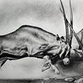 The Arabian Oryx by Atish Banerjee