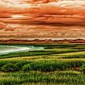 The Atlantic White Cedar Swamp Trail by Heather Hubbard